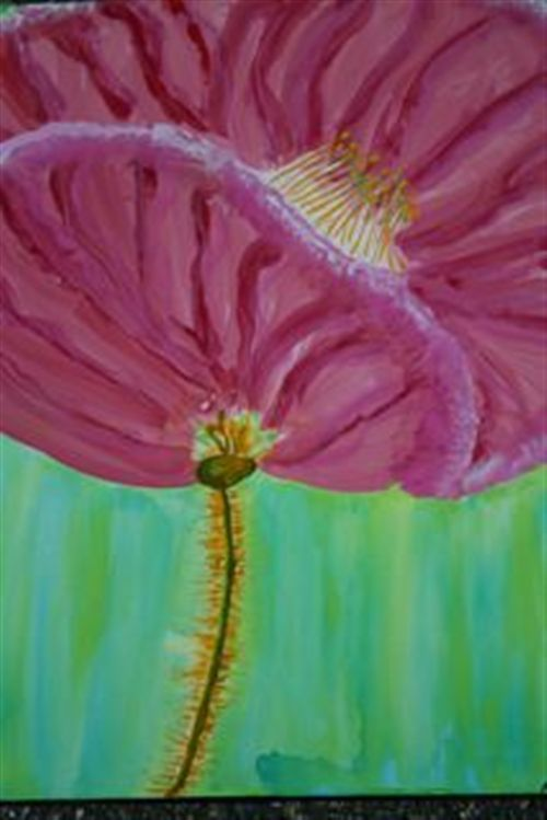 Big Pink Poppy